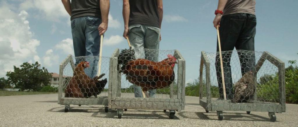 Chicken Campaign Grand Cayman